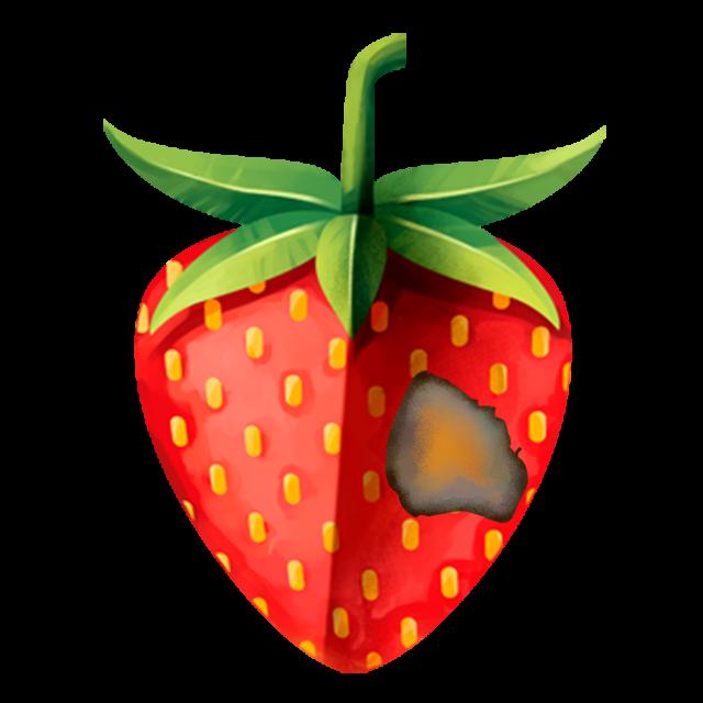 Erdbeere mit Graufäule