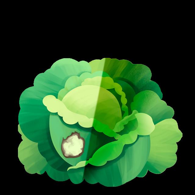 Flecken Kopfsalat 1