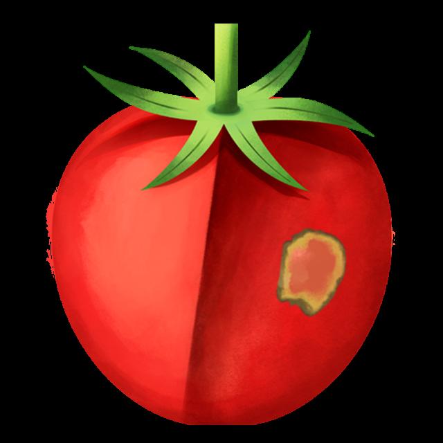Flecken Tomate 1