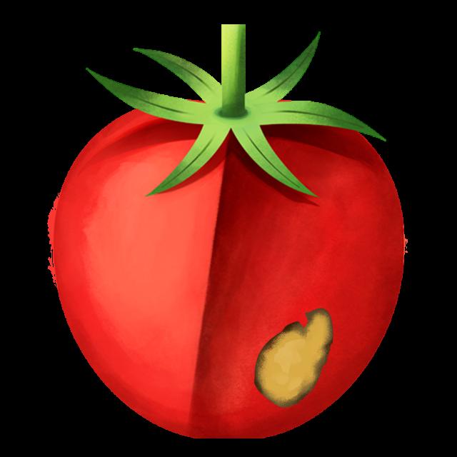 Flecken Tomate 3