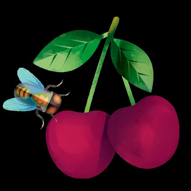Kirsche mit Fliegen