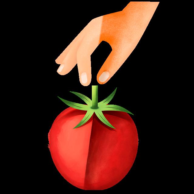 Hand pflückt Tomate