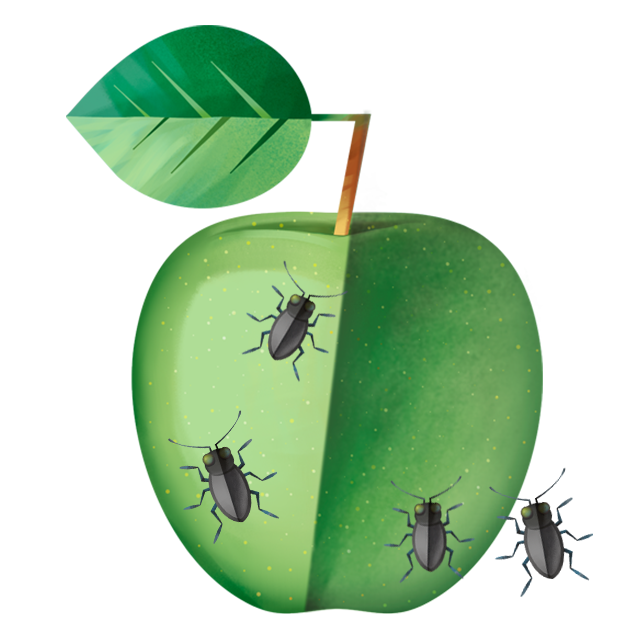Käfer Apfel
