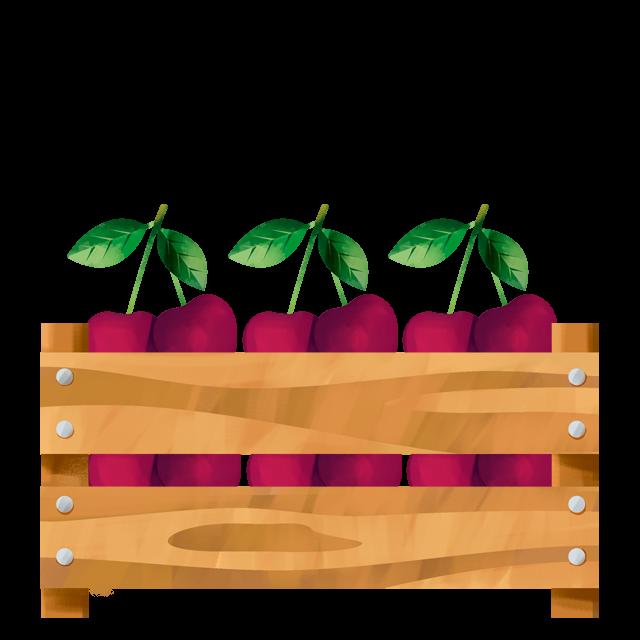 Kirschen in Kiste
