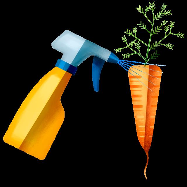 Sprühflasche Karotte