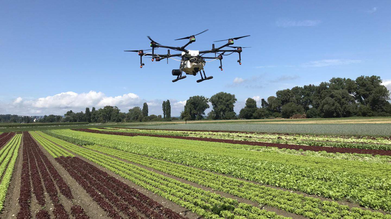 Gemüseanbau mit Drohne